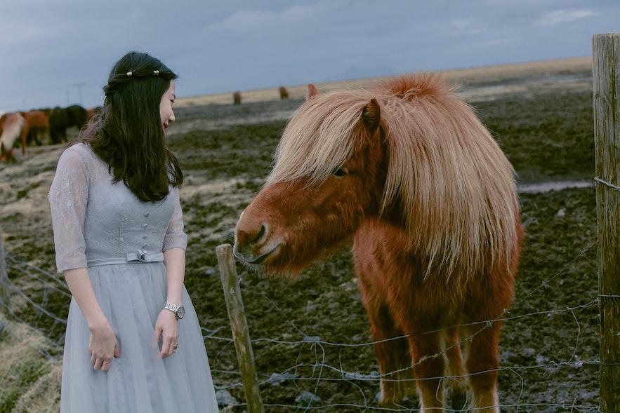 冰島馬互動婚紗相