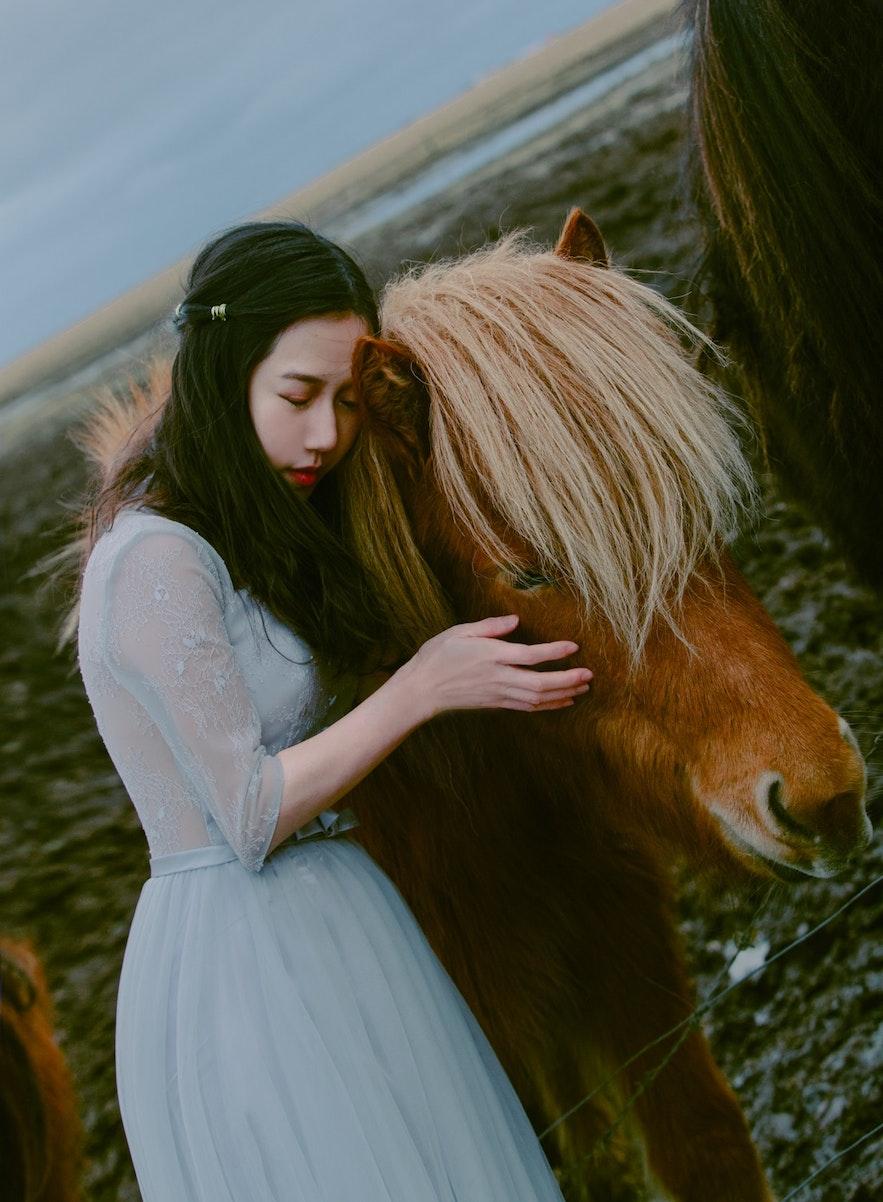 與冰島馬 一起拍寫真