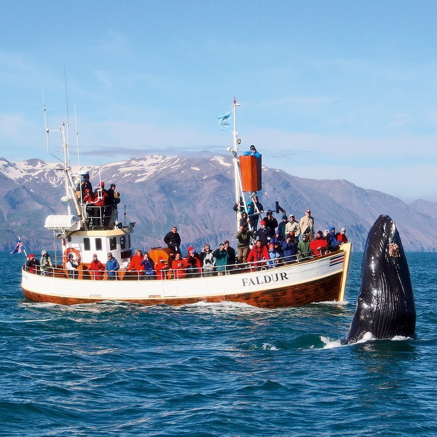 Top 5 Iceland Excursions