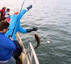 Sea Angling on Faxafloi Bay | Fresh Gourmet Tour