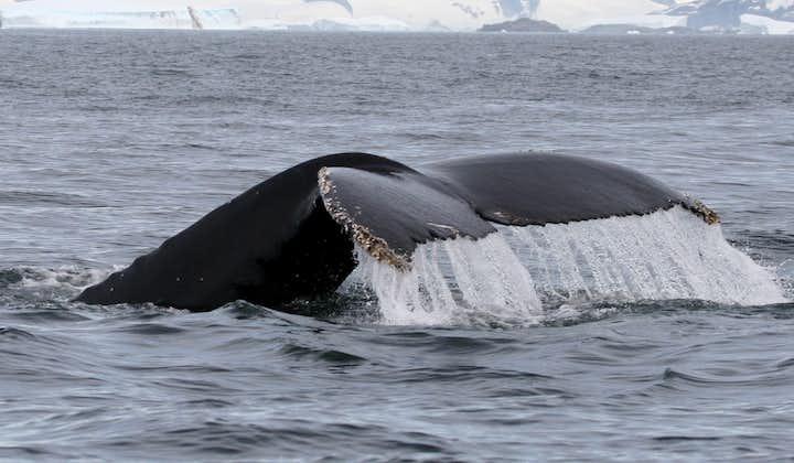 Наблюдение за китами | Снайфелльснес