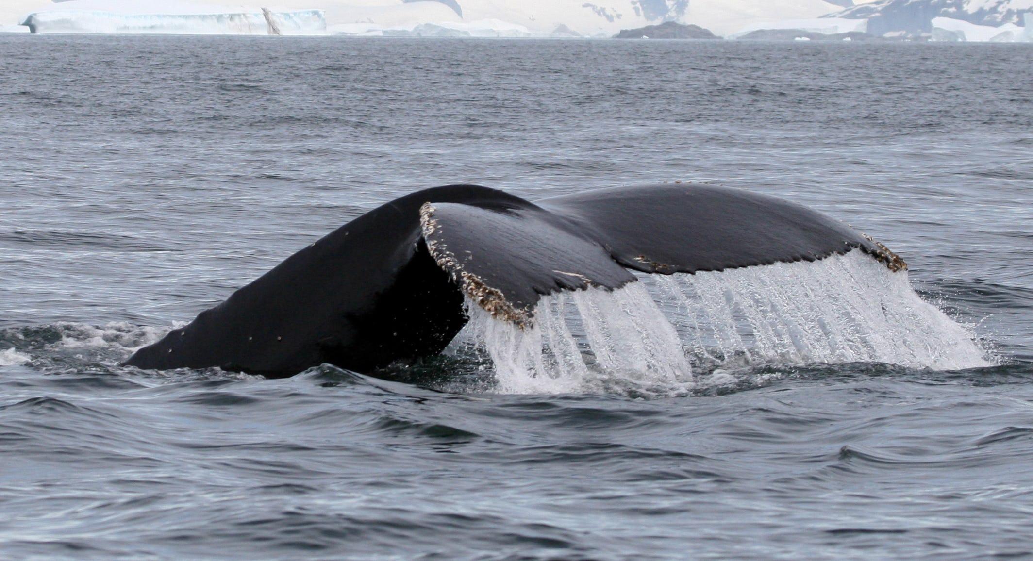Observez les baleines en Islande lors de cette sortie baleines dans le fjord Breiðafjörður sur la péninsule de Snaefellsnes