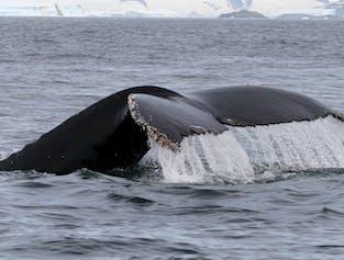 Whale Watching   Snaefellsnes Peninsula