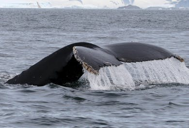 Whale Watching on the Snaefellsnes Peninsula