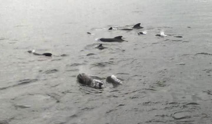 アイスランド周辺の鯨はあまり臆病ではないので、人の近くに寄ってくることがあります。