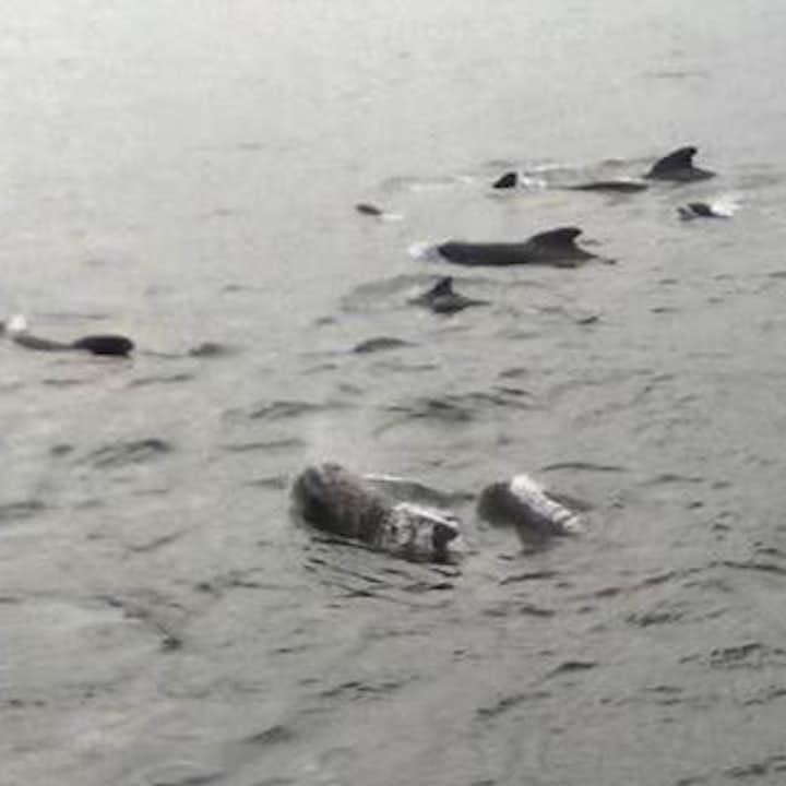 冰岛海域的鲸鱼非常友好不怕人