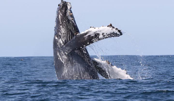 Ekscytująca 2-godzinna wycieczka łodzią z obserwacją wielorybów na Fiordach Zachodnich i transferem z Holmaviku