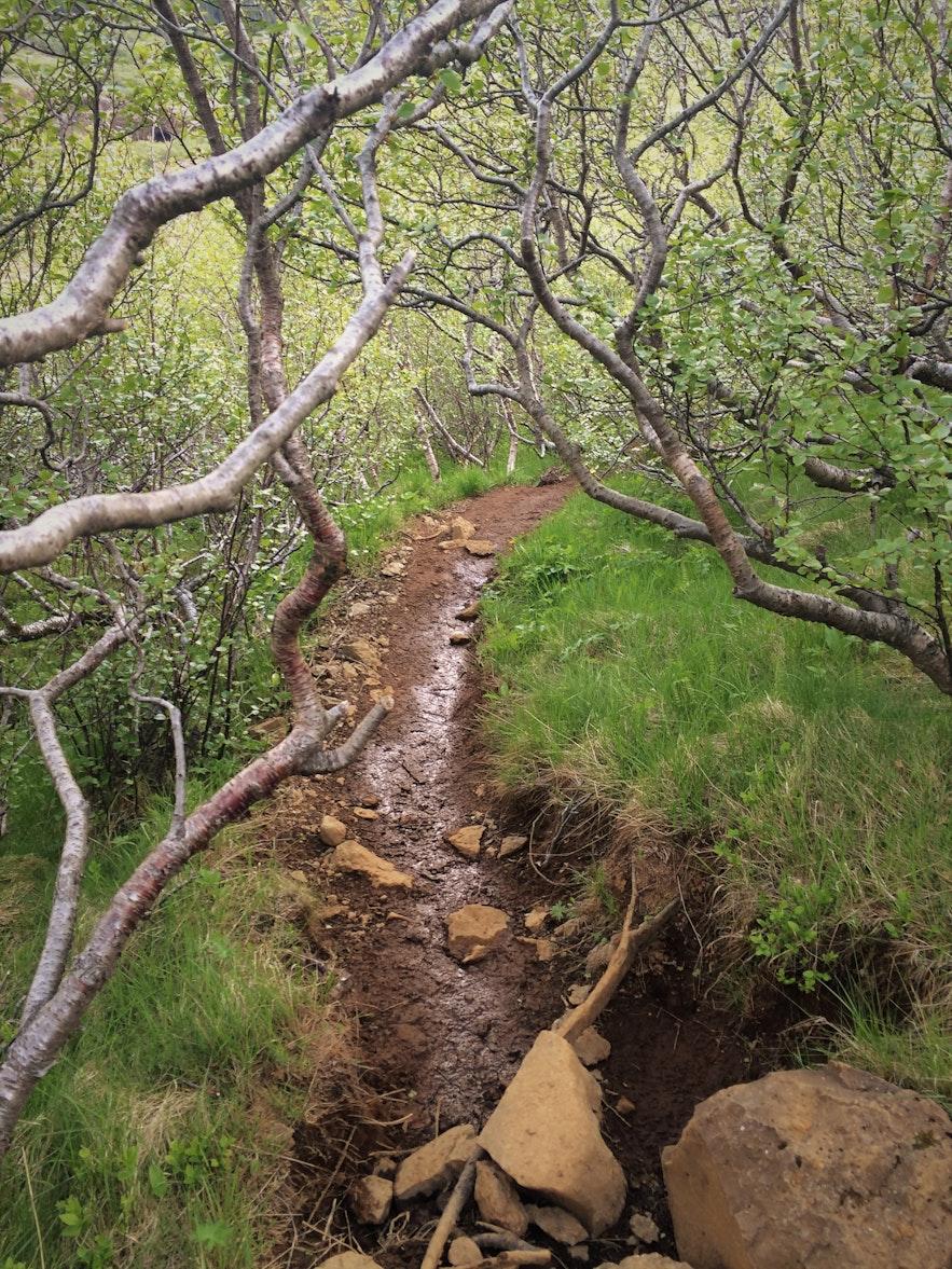 Der Rückweg von Glymur am Westufer