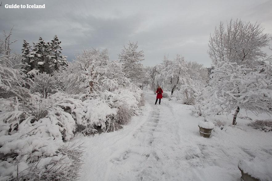 冰島深冬雪景