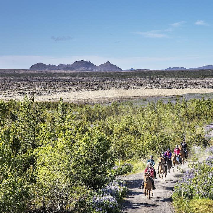 骑马旅行团 - 火山熔岩地貌 与呆萌冰岛马近距离接触  冰岛特色体验
