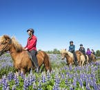 Fields of lupins cover Iceland from Spring, and horseback is a great place to admire them from