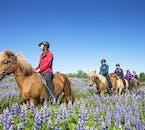Sortie à cheval dans la nature islandaise non loin de Reykjavik