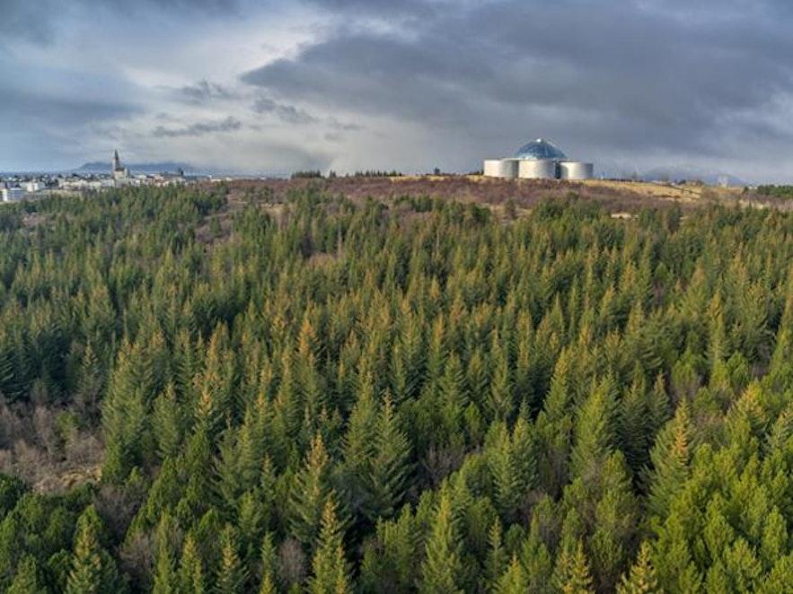 아이슬란드에서는 제법 큰 숲에 속하는 외스큐흘리드의 모습