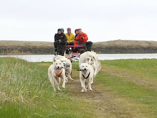 Sled Dog Ride and the Golden Circle Tour