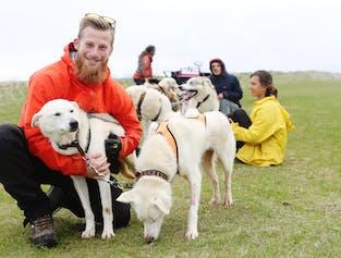 Sled Dog Ride Tour| Transfer service from Reykjavik