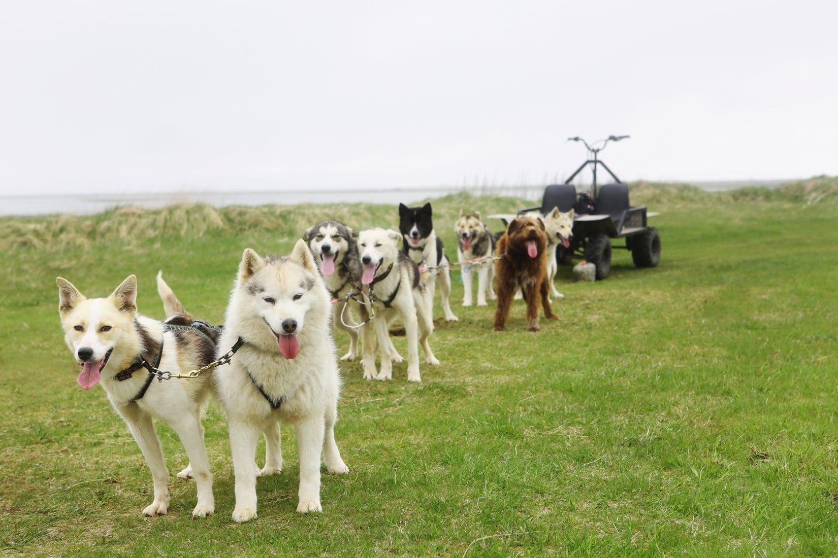 Hundeschlitten-Tour | Treffpunkt vor Ort