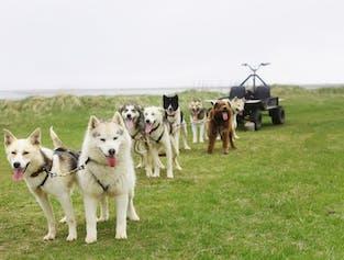 Dog Ride Tour | Meet on Location