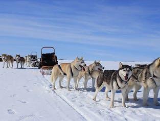 ミーヴァトン湖 そり犬シベリアンハスキーとふれあおう