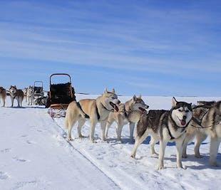 Визит в питомник ездовых собак на исландской ферме   Озеро Миватн