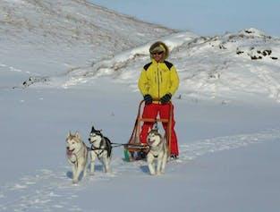 5 dni, wyprawa na północ | Husky w rejonie jeziora Myvatn