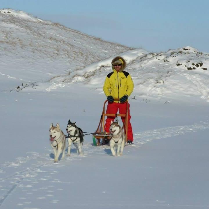 Psie zaprzęgi niedaleko jeziora Myvatn