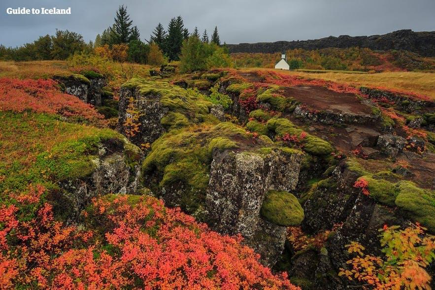 冰岛黄金圈辛格维利尔国家公园在秋季是尤为美丽,苔原间冒出五颜六色的植被,秋季来这里还可以采蓝莓