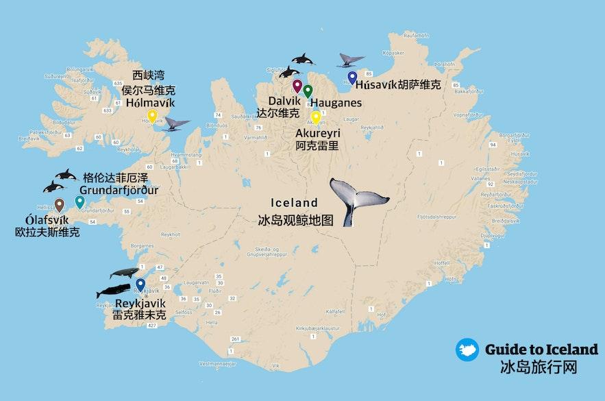 冰岛观鲸地图