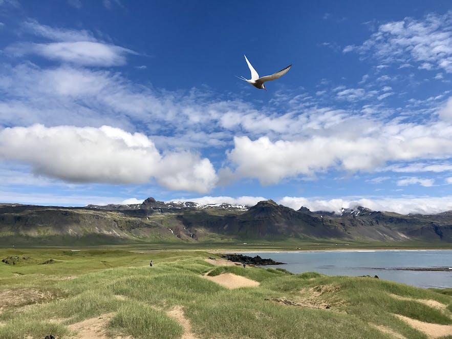 冰島布迪爾俯瞰