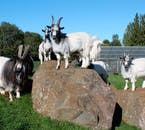 Kids will enjoy the Family Park and Zoo, where they can pet farm animals.
