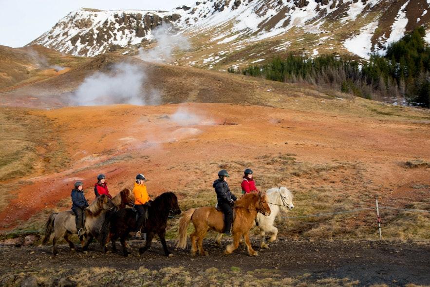 冰島南部騎馬