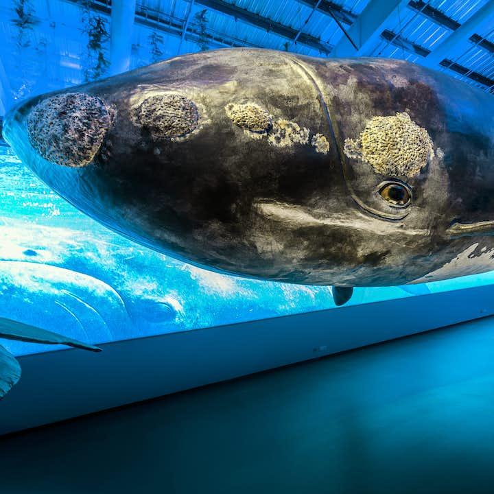 雷克雅未克鲸鱼博物馆门票