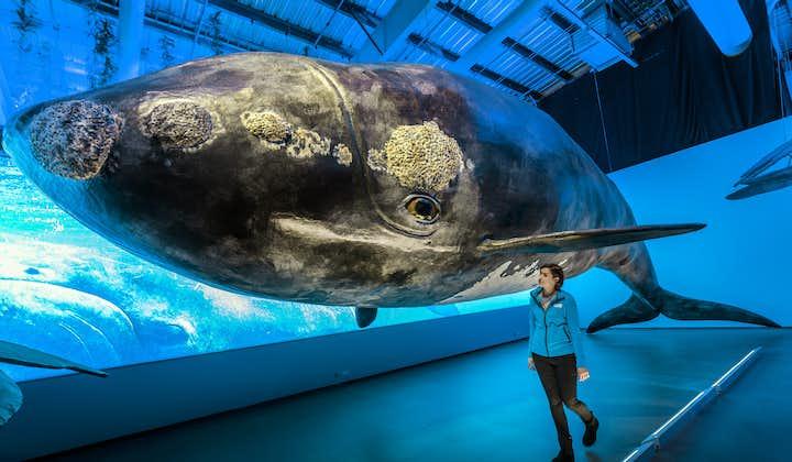 Entrada a la exhibición de Whales Of Iceland (Ballenas de Islandia) en Reikiavik