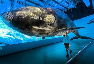 Entrée à Whales of Iceland | Musée des baleines à Reykjavik