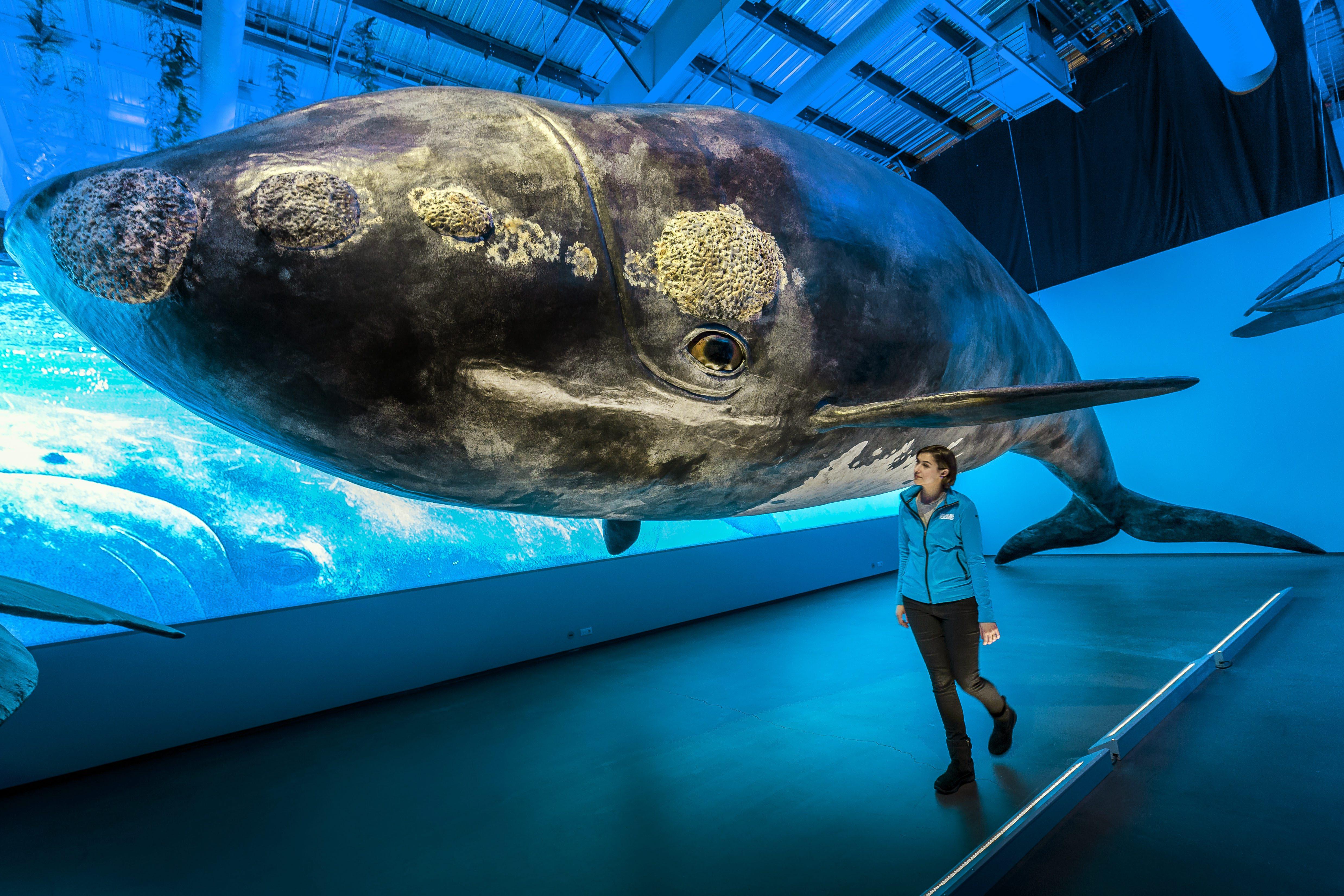 Un modelo a tamaño real de una ballena