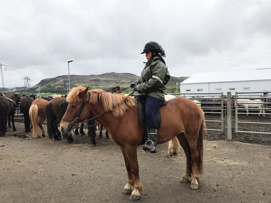 在冰島騎馬