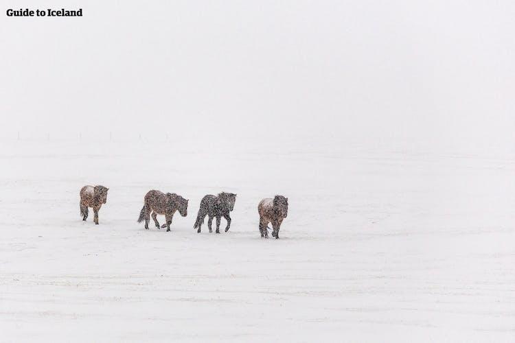 Voyage organisé hiver 10 jours   Tour de l'Islande et Snaefellsnes