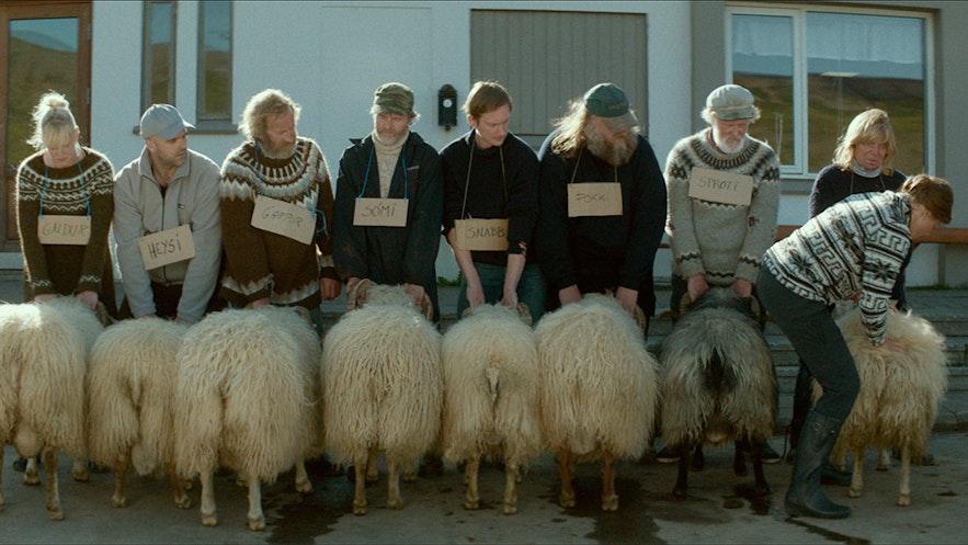 冰岛电影《公羊》剧照