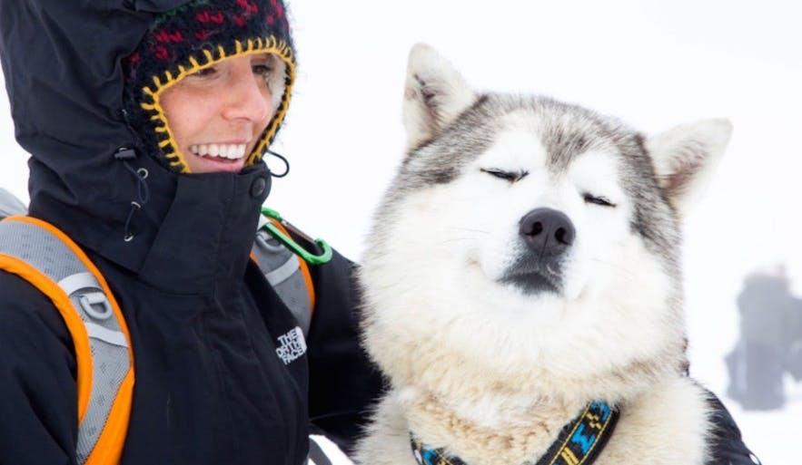 かわいい犬たちと触れ合えるアイスランドの犬ぞりツアー
