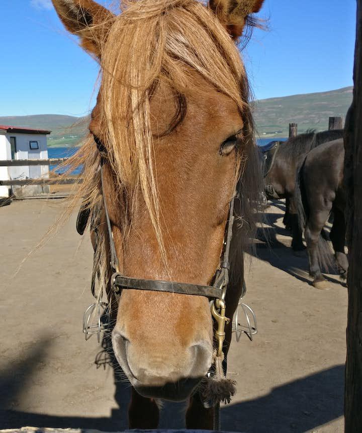 フレンドリーな馬