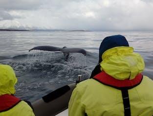 Extreme Whale Watching Tour from Akureyri