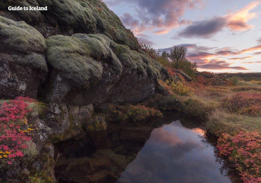 Þingvellir National Park cloaked in autumn colours