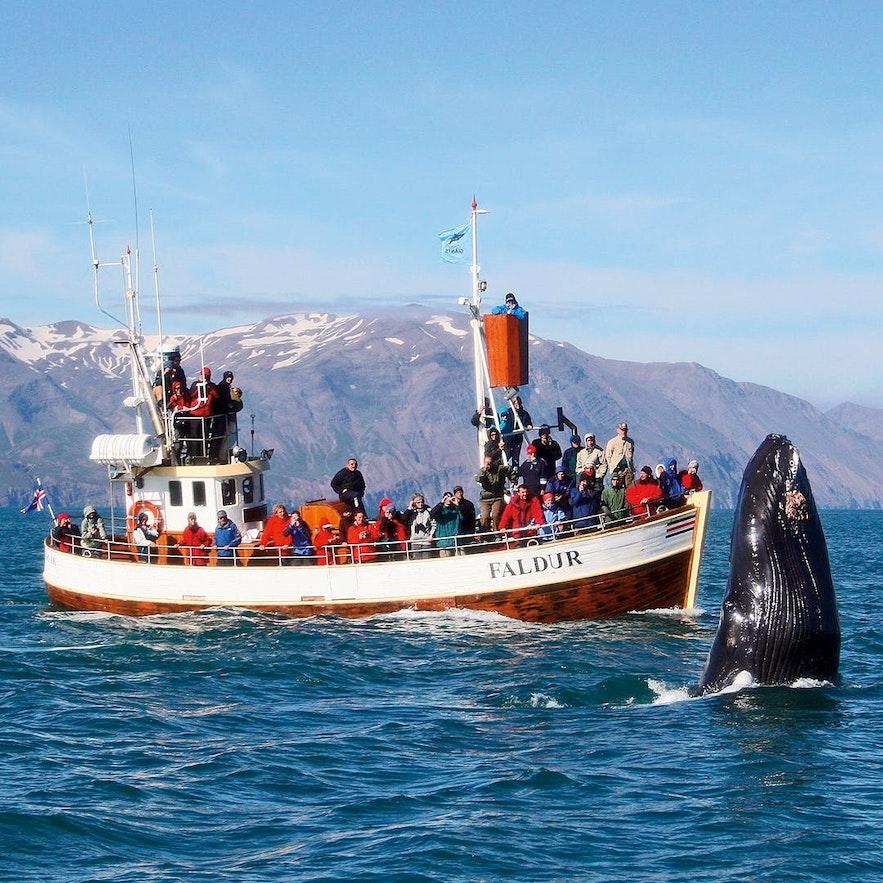 冰島胡薩維克傳統觀鯨船