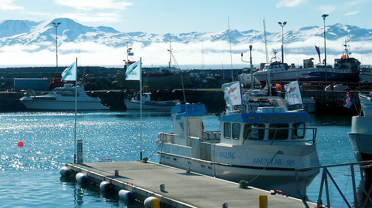 Being 'The Whale Watching Capital of Europe', Húsavík town is the perfect place to go on a Whale Watching excursion.