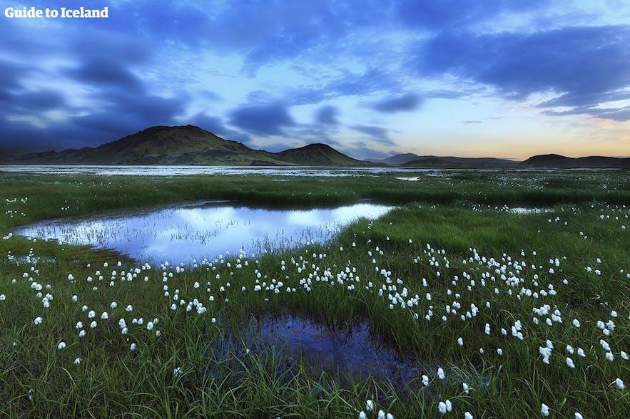 Landmannalaugar is in de zomer voor iedereen geopend.