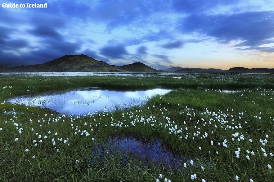 Landmannalaugar ist im Sommer für alle zugänglich.