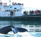 Whale Watching vessels allow you to get up close and personal with these majestic animals.