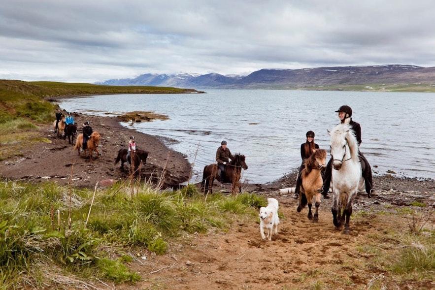 冰島北部阿克雷里騎馬