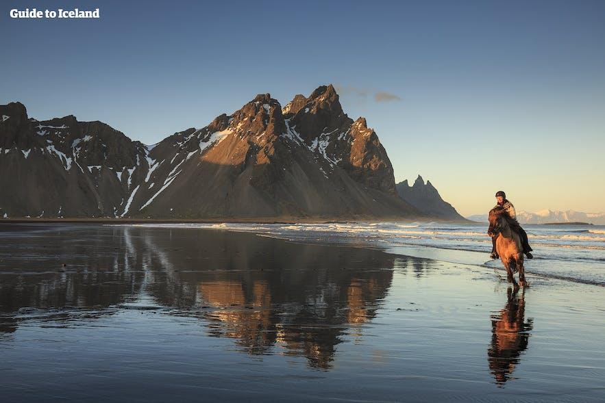 アイスランド東部のヴェストラホルン山を眺めるホーストレッキング体験