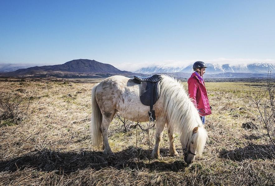在冰岛骑马