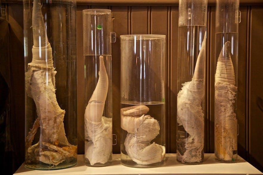 Eine Auswahl der Artefakte des Penismuseums in Reykjavik